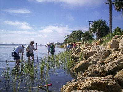 Volunteers planting shoreline vegitaion