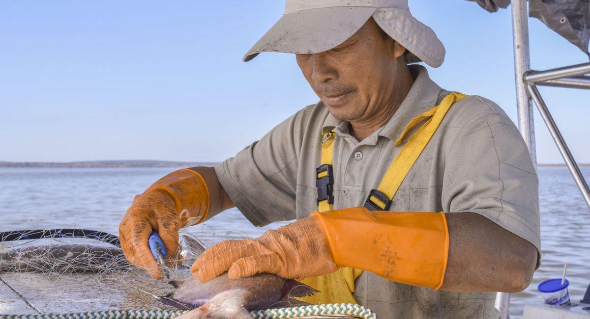Shad fishing 5