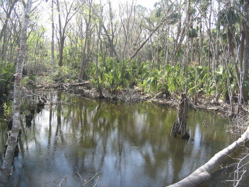 Moccasin Springs in Lake County
