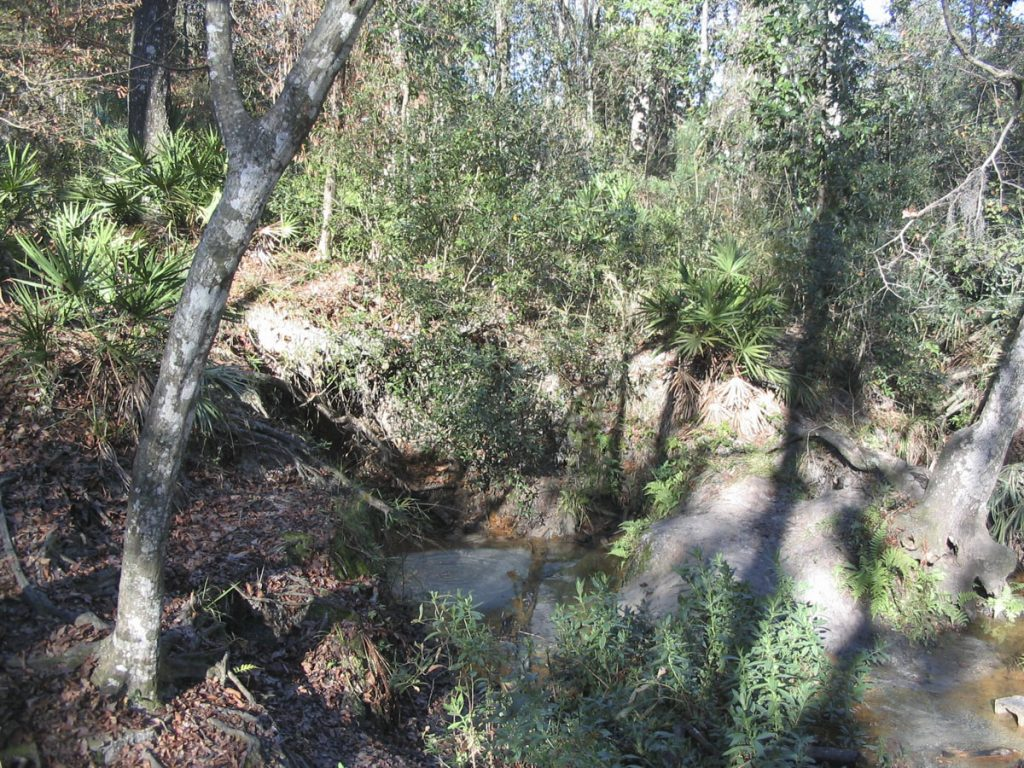 W.W. Gay Spring in Clay County