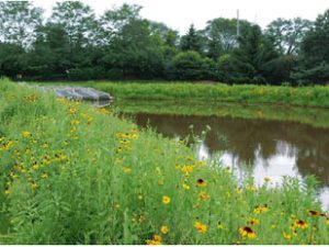 Stormwater deterion pond edged with flowers