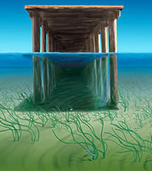 Artist rendering of a dock with aquatic grass