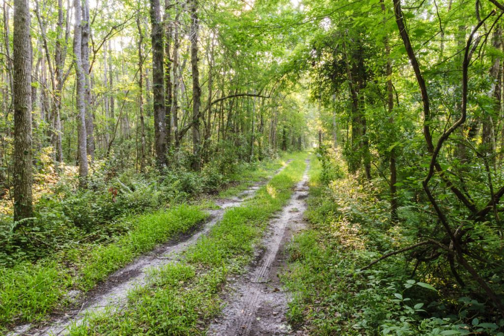 Trail at Dunns Creek Conservation Area