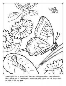 St. Johns River coloring sheet number 6