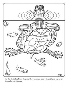 St. Johns River coloring sheet number 7