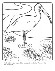 St. Johns River coloring sheet number 9