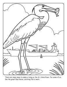 St. Johns River coloring sheet number 15