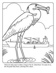 St. Johns River coloring sheet number 15