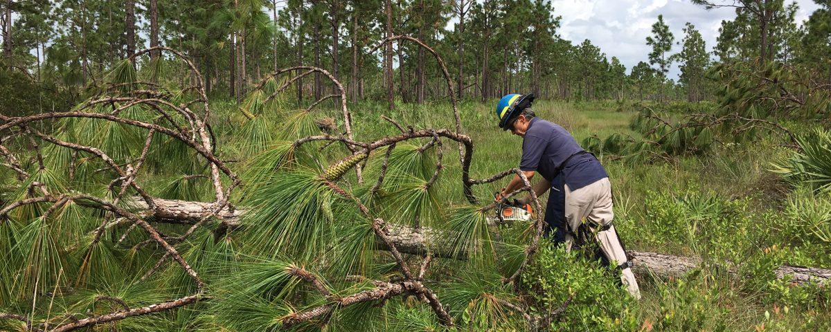 District staff member cutting up a fallen tree