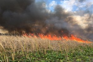 Prescribed fire helps reduce the possibility of dangerous wildfire while enhancing land's environmental quality.