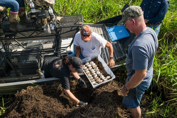 Wounded veterans participate in an alligator egg harvest through the Operation Outdoor Freedom Program.