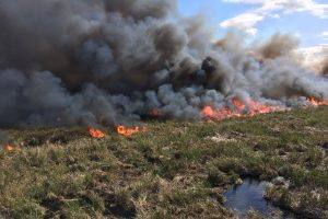 Prescribed fire at Lake Apopka North Shore - Aerial ignition