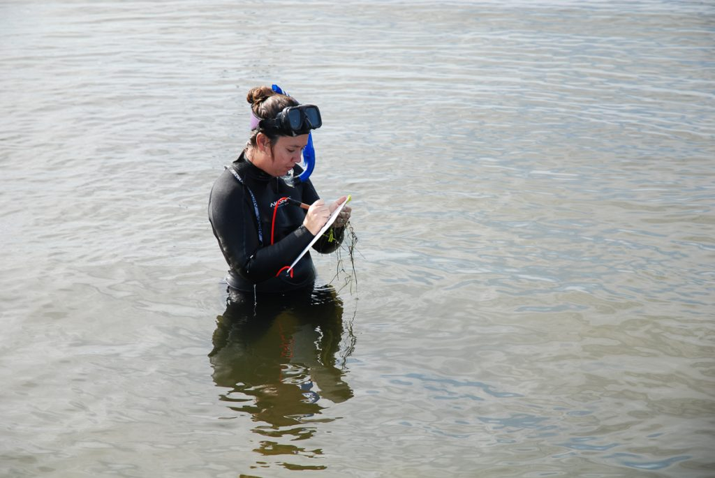 Lauren Hall standing in the water writing on a clipboard