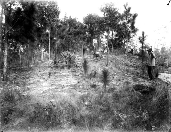 Historic photograph of a native American mound near Melrose, FL.