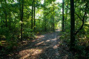 Black Creek Ravines Conservation Area