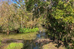 Little Wekiva River flowing through a forest