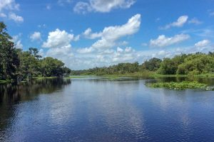 Wekiva River under a blue sky with puffy clouds
