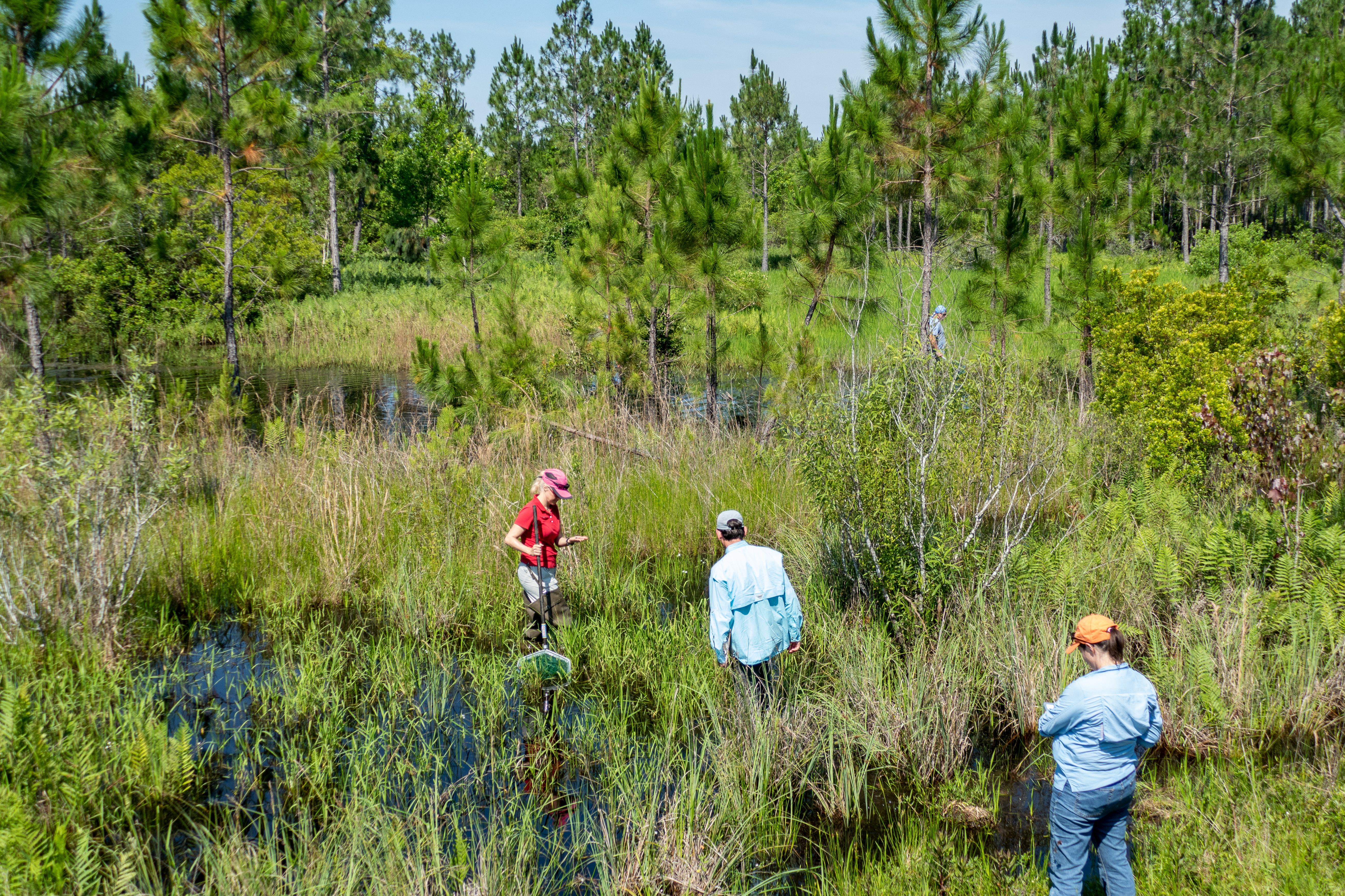 District staff inventoring flora and fauna in a wetland at Silver Springs Forest Conservation Area