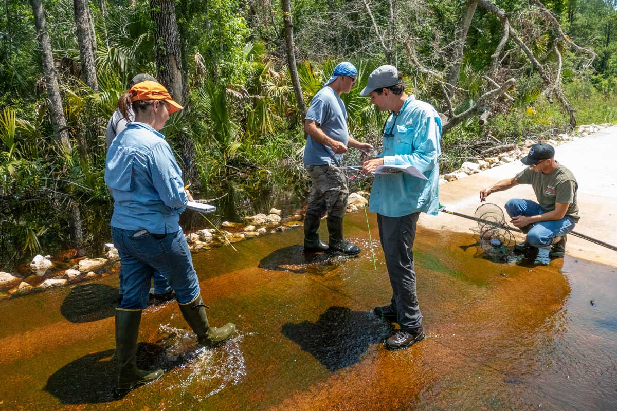 District staff inventoring flora and fauna in a creek at Silver Springs Forest Conservation Area