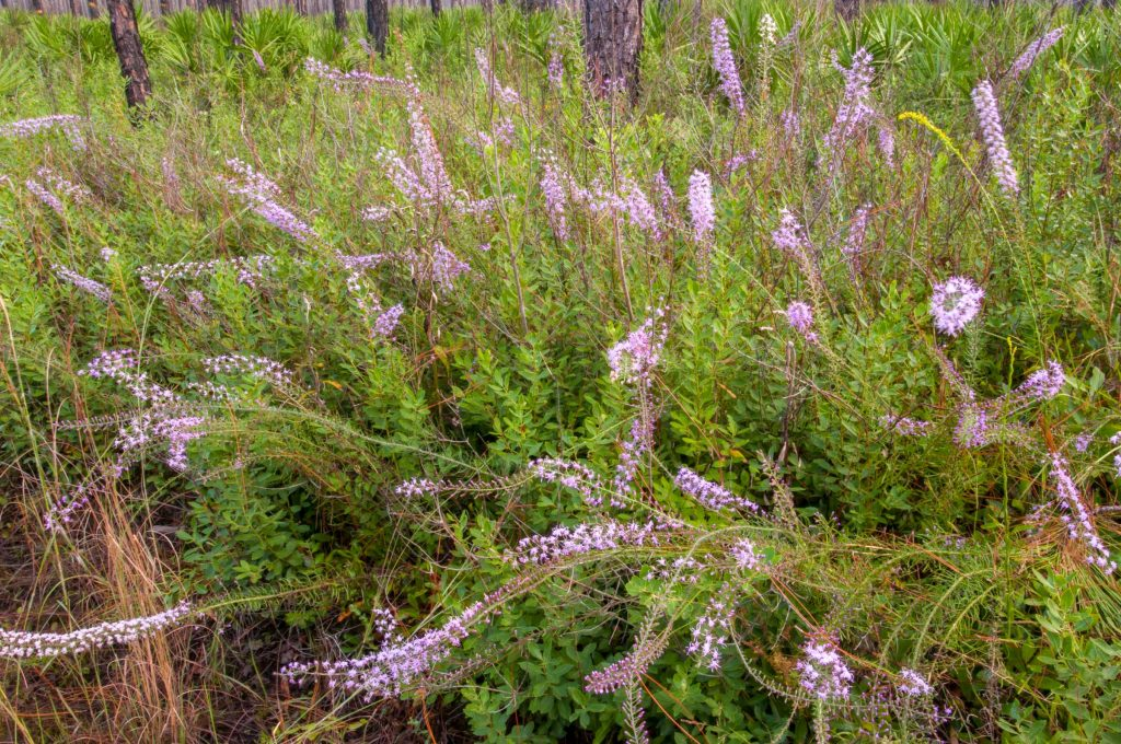 Wildflowers blooming in a pine forest