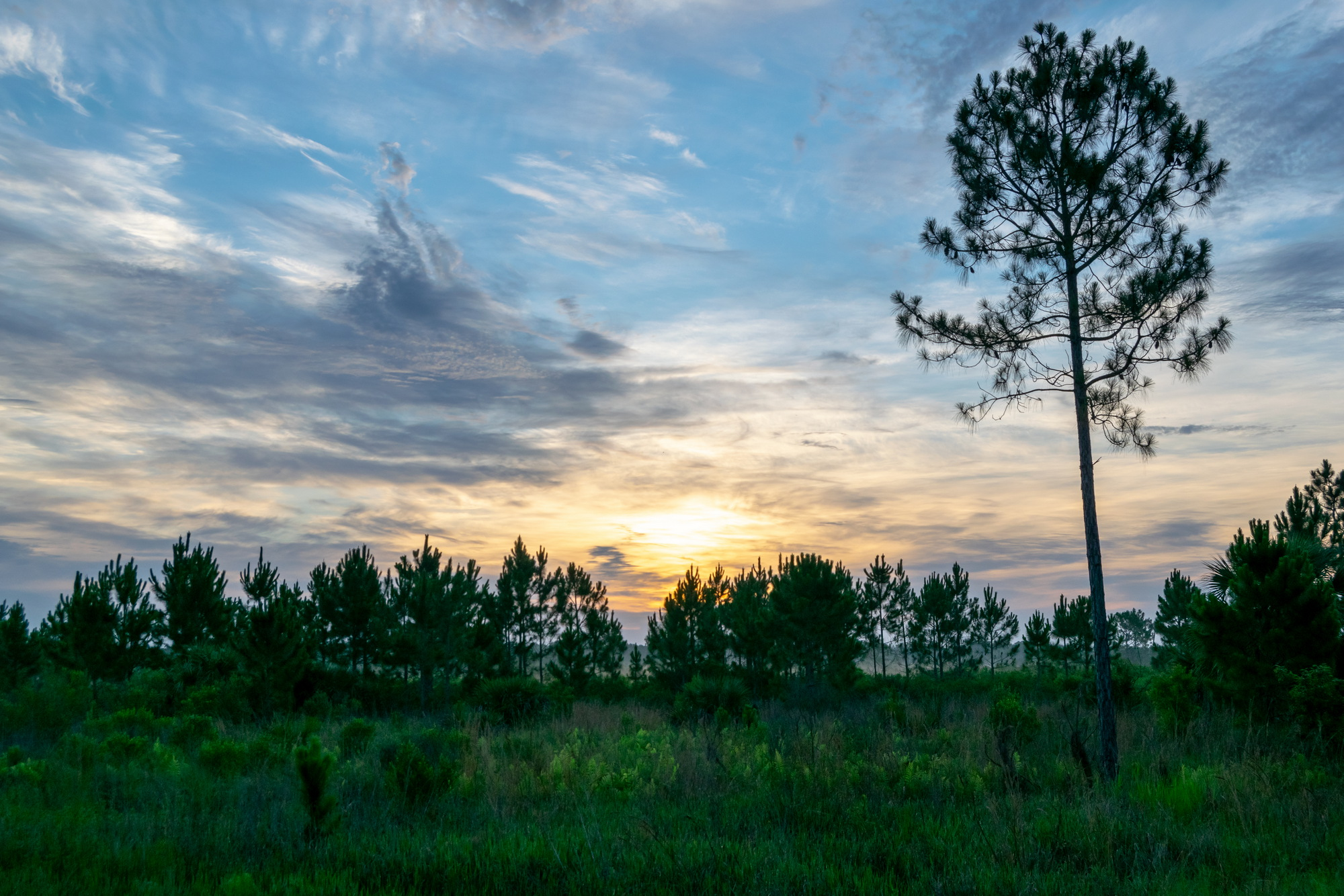 Sun rising behind pine trees at Buck Lake Conservation Area\\\\\\\\