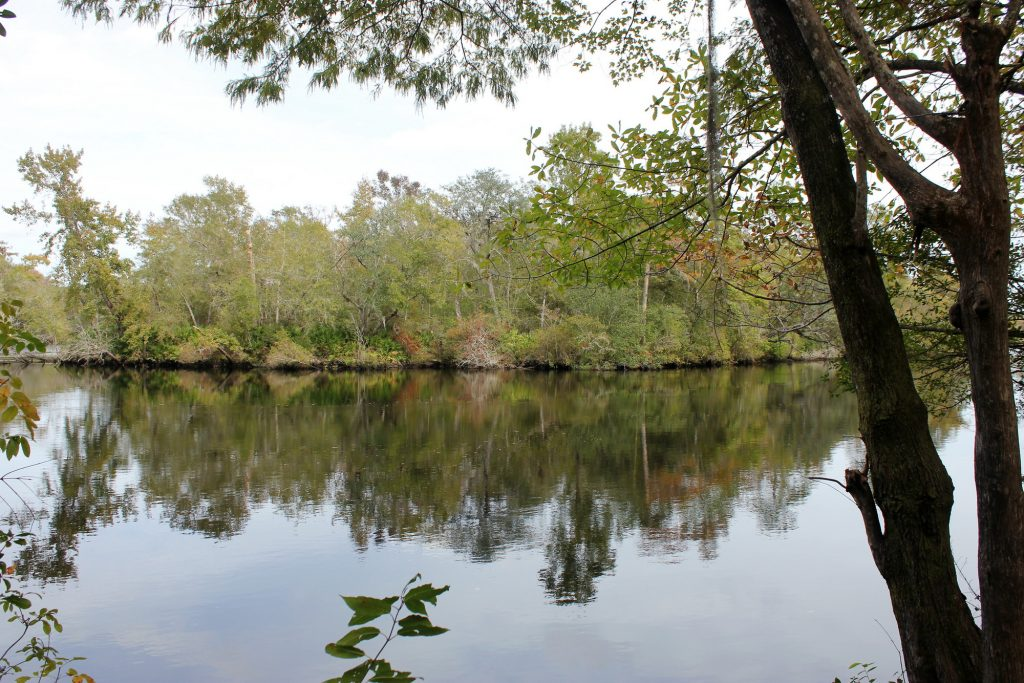 Ralph E. Simmons Memorial state Forest