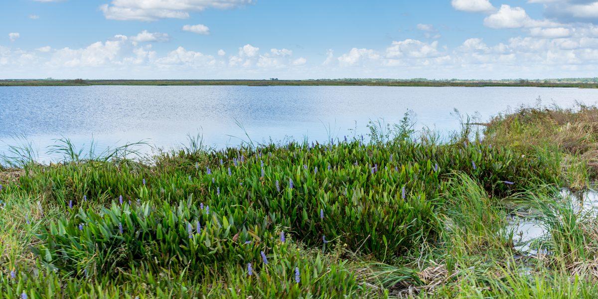 January-Lake-Apopka-North-Shore-1080