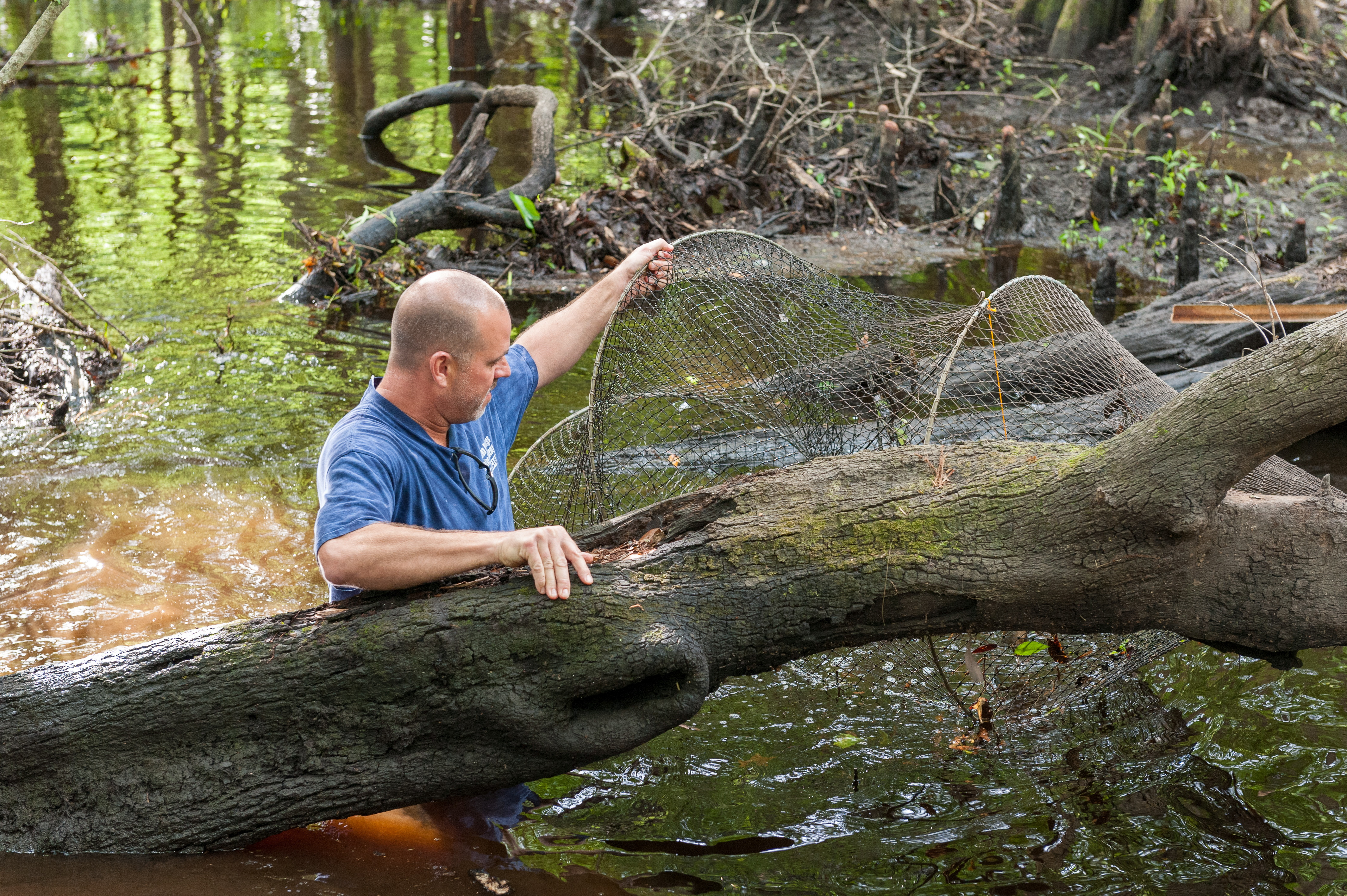 Brian Emanuel checks a trap for vertebrates and crayfish during a property biology survey