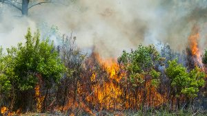 Prescribed fire burning underbrush