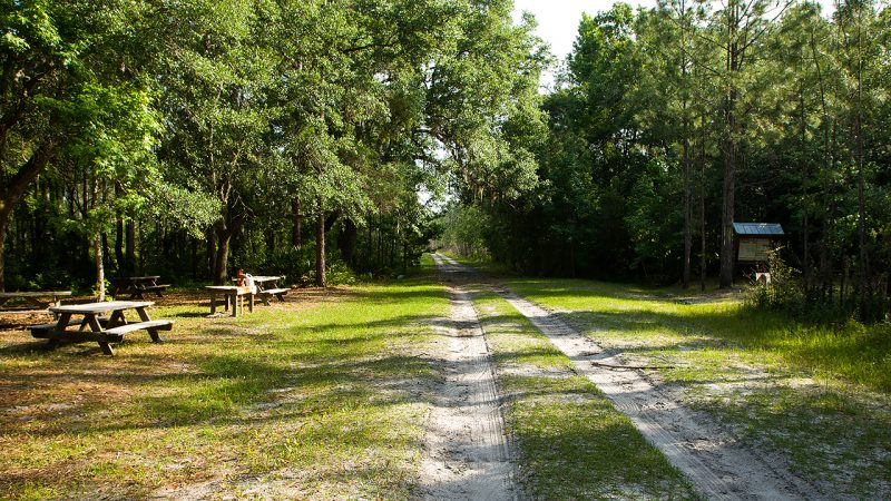 A dirt road in a forest leading past some picnic tables and a kiosk