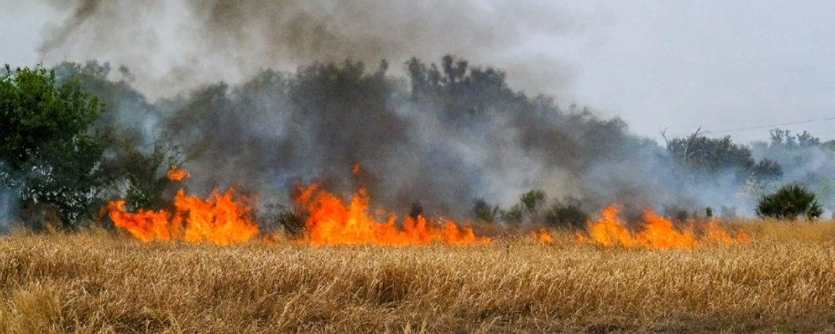 Prescribed fire buring in an open grassy area