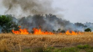 Fire buring in an open grassy area