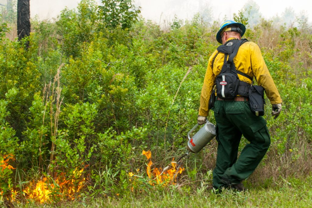 District staff using a drip torch to start a prescribed fire