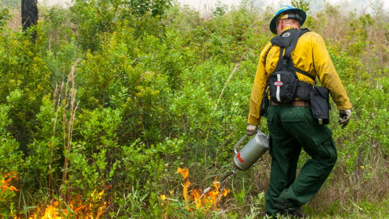 District staff using a drip torch to start prescribed fire