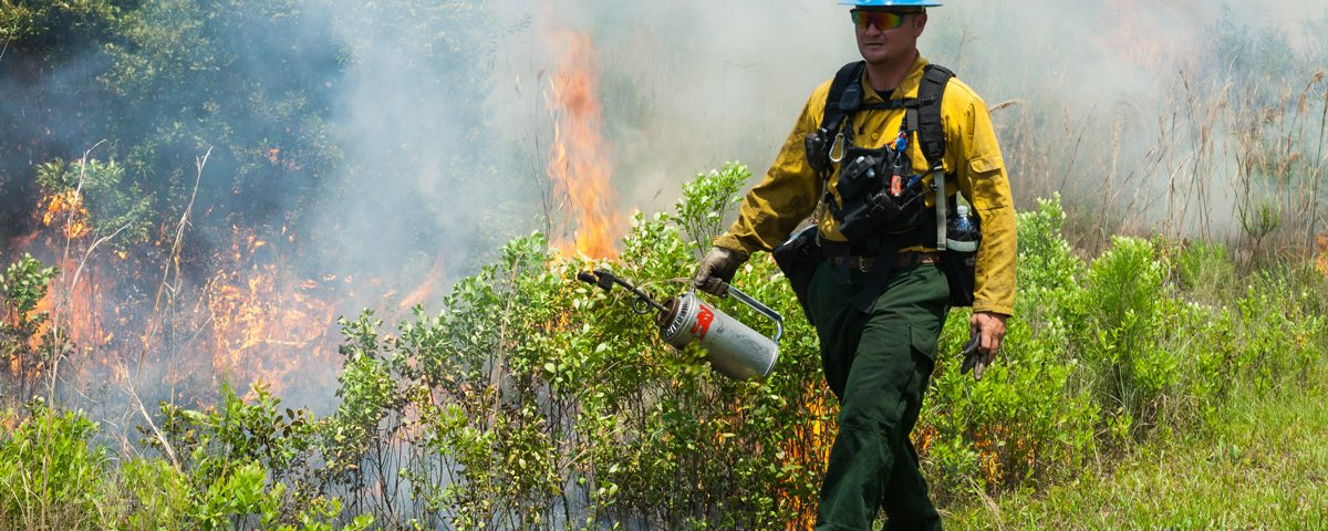 Man with drip torch starting a prescribed fire