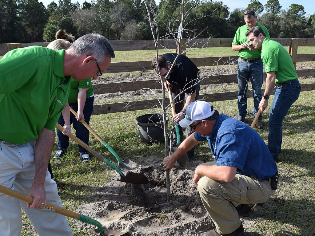 R.H Davis and Publix employees planting small trees at Sunnyhill Restoration Area