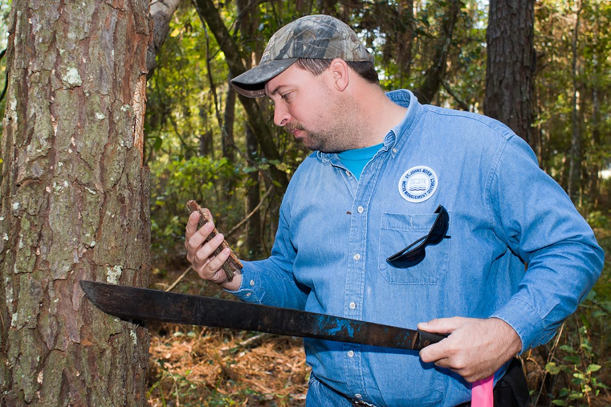 Photo of a man holding a machete and a piece of tree bark to check for insect infestation.