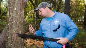 Land Manager checking for pine beetle infestation