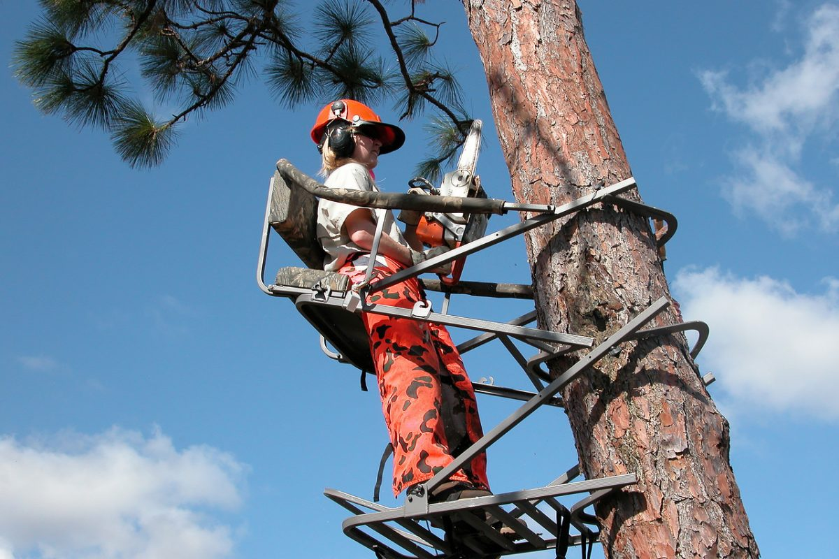 Photo of a woman wearing a hard hat and holding a small chain saw, standing in a metal support cage attached to a pine tree.