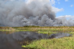 Smoke billowing up from a prescribed fire in a marsh