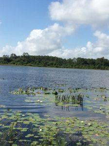Lilies spread across Sylvan Lake