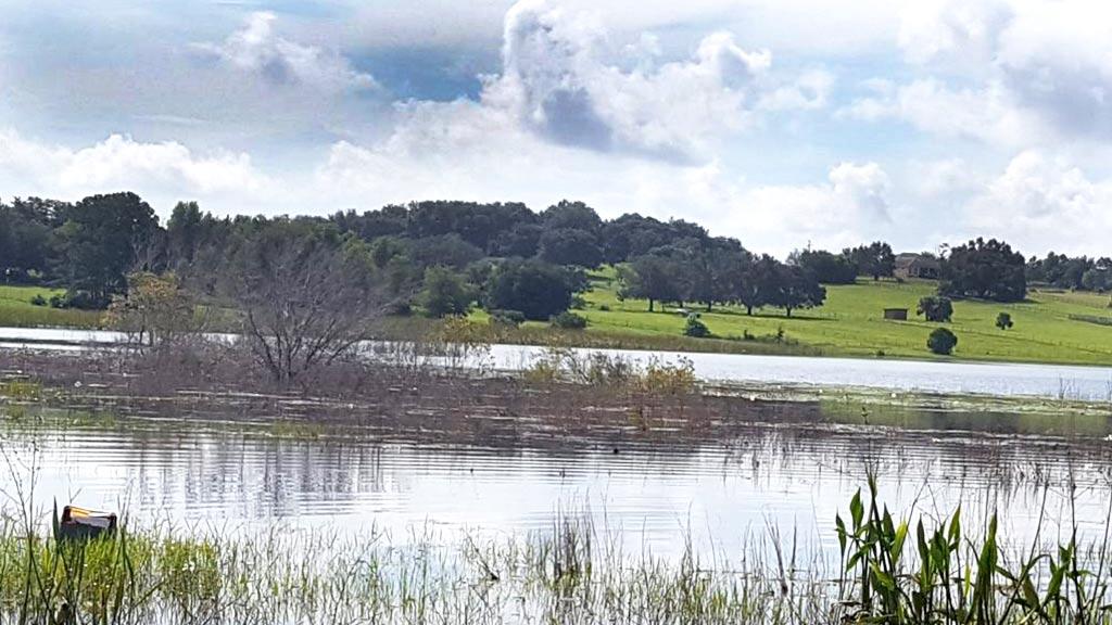 Photo of Lake Apshawa from the shore