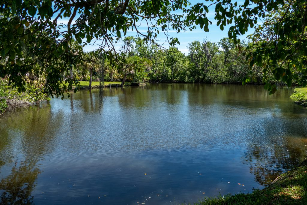View of Crane Creek from under the shadow of a tree
