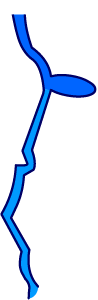 Illustration of Apalachicola River