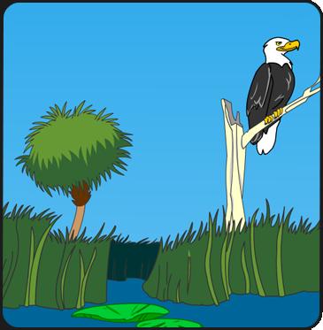 Illustration of the Everglades
