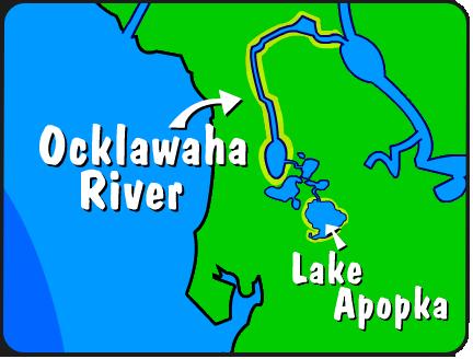 Illustration of the Ocklawaha River