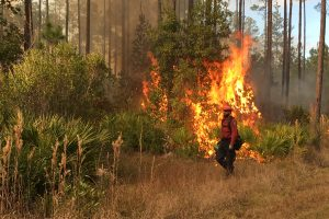 Firefighter walking in-front of a prescribed fire