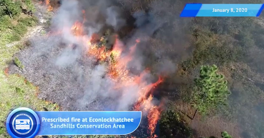 Prescribed fire in Econlockhatchee Sandhills