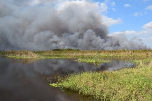 Prescribed fire at Fellsmere Water Management Area