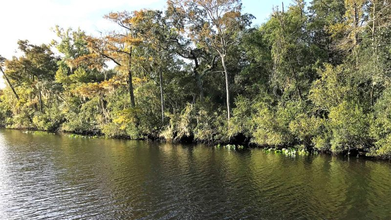 Line of trees at Black Creek in Clay County
